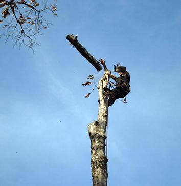 best-port-orange-tree-removal