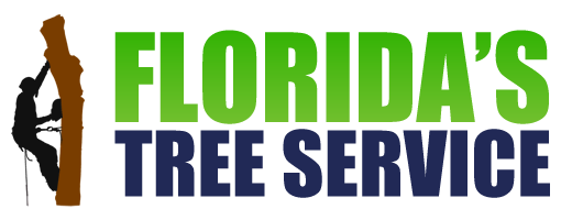 Best Tree Service Company Port Orange Florida