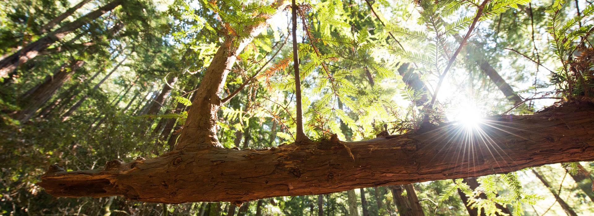 floridas-best-tree-service-company