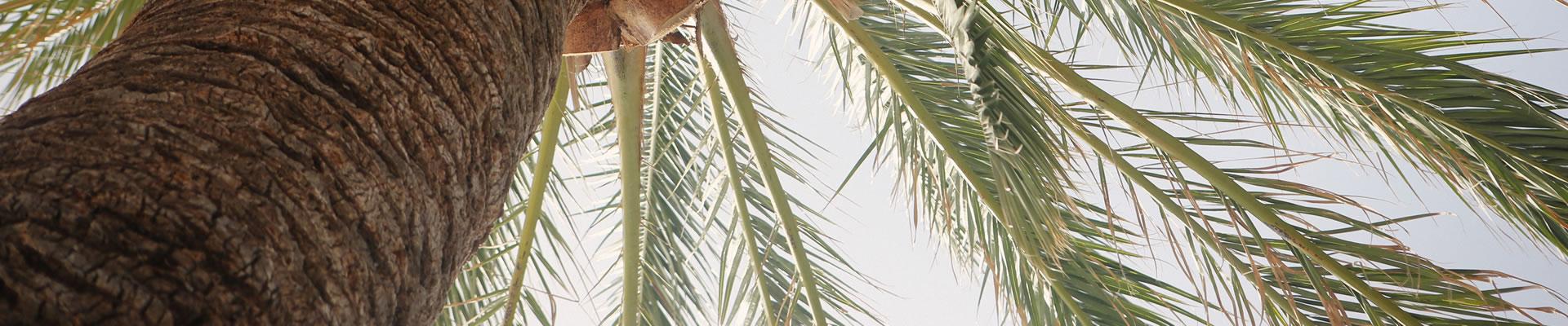 holly-hill-florida-tree-removal-company