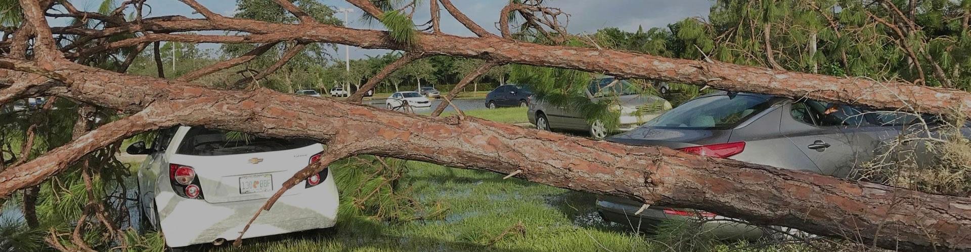 hurricane-irma-tree-cleanup