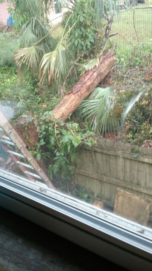 hurricane-tree-removal-new-smyrna-beach-florida