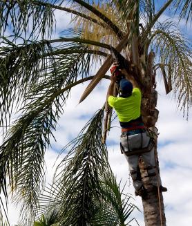 Port Orange Tree Services