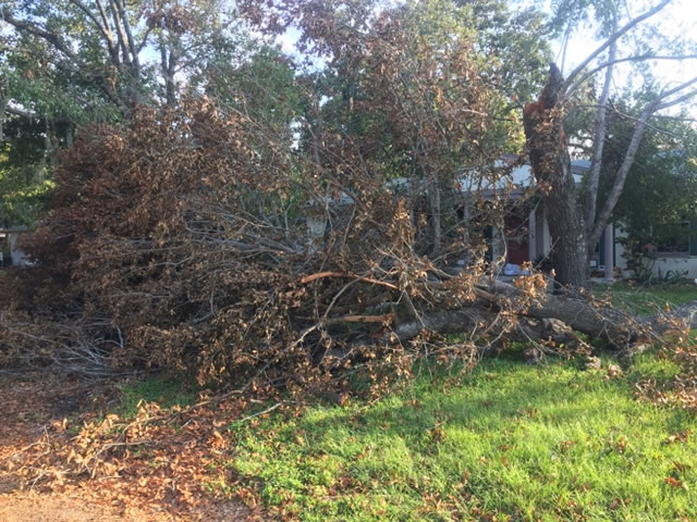 remove-a-tree-that-fell-on-my-property-ormond-beach-fl