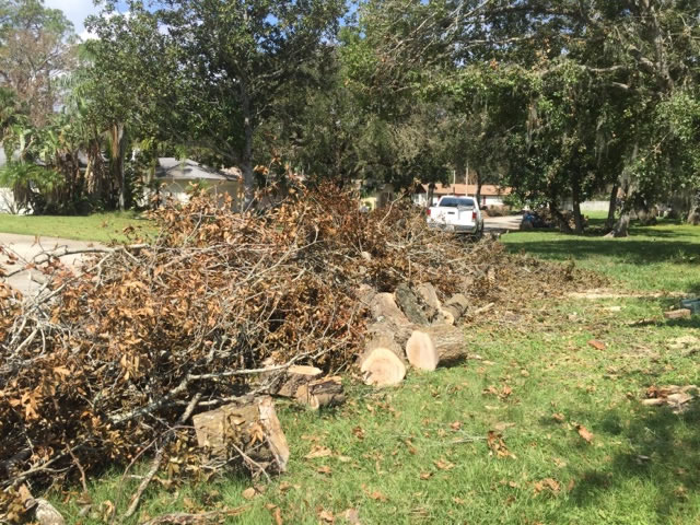remove-tree-that-fell-in-my-yard-port-orange-fl