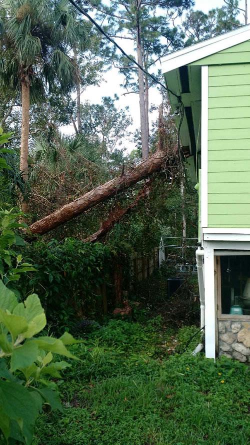 storm-tree-removal-new-smyrna-beach-florida