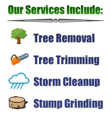 port-orange-fl-tree-cleanup-company