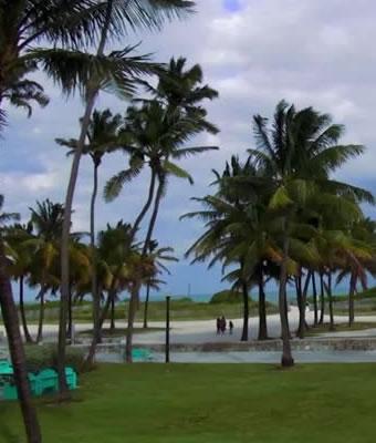 tree-removal-daytona-beach-florida
