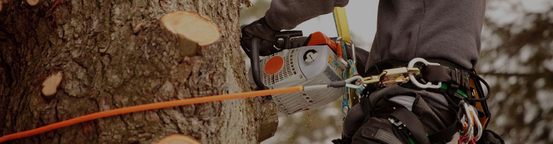 tree-services-floridas-tree-service-professional